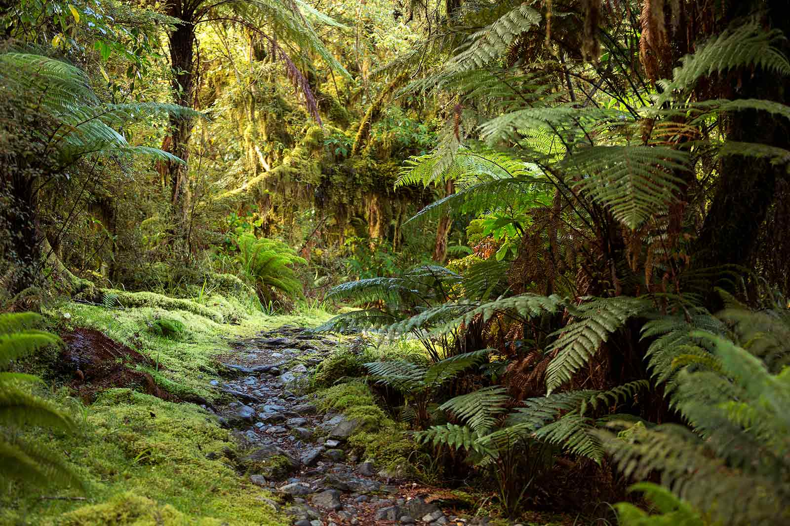 milford-track-jungle-walk-new-zealand-2