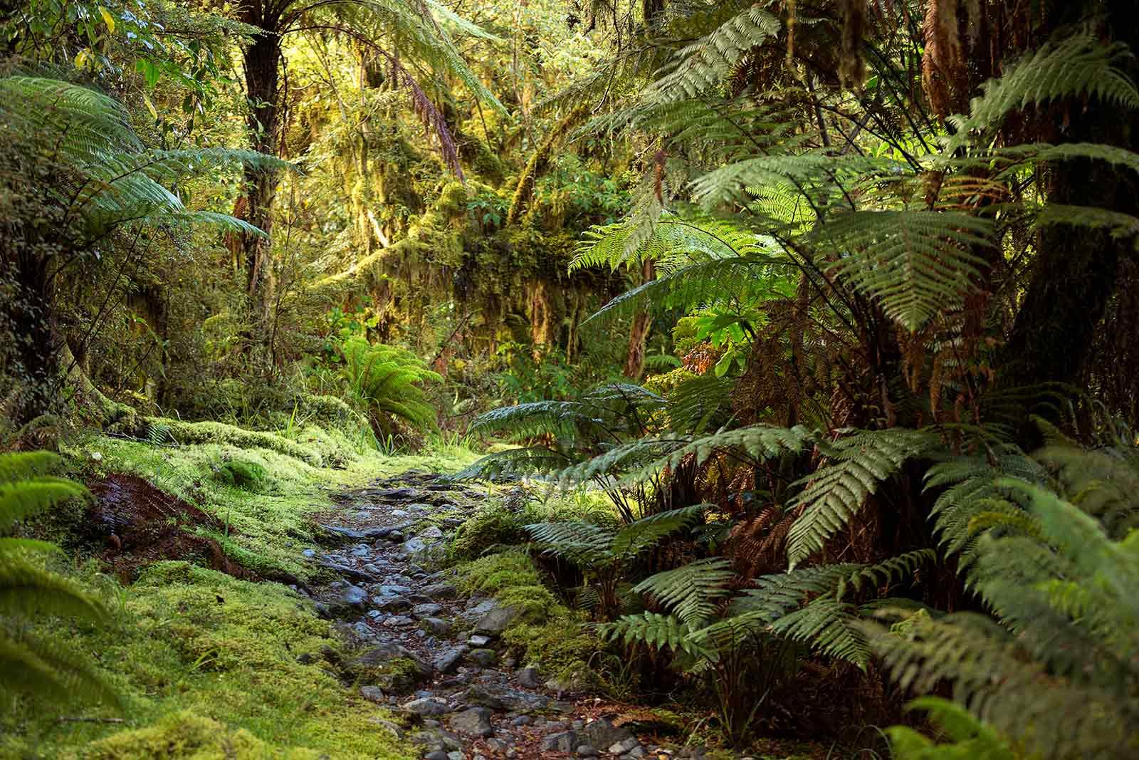 milford-track-jungle-walk-new-zealand-2
