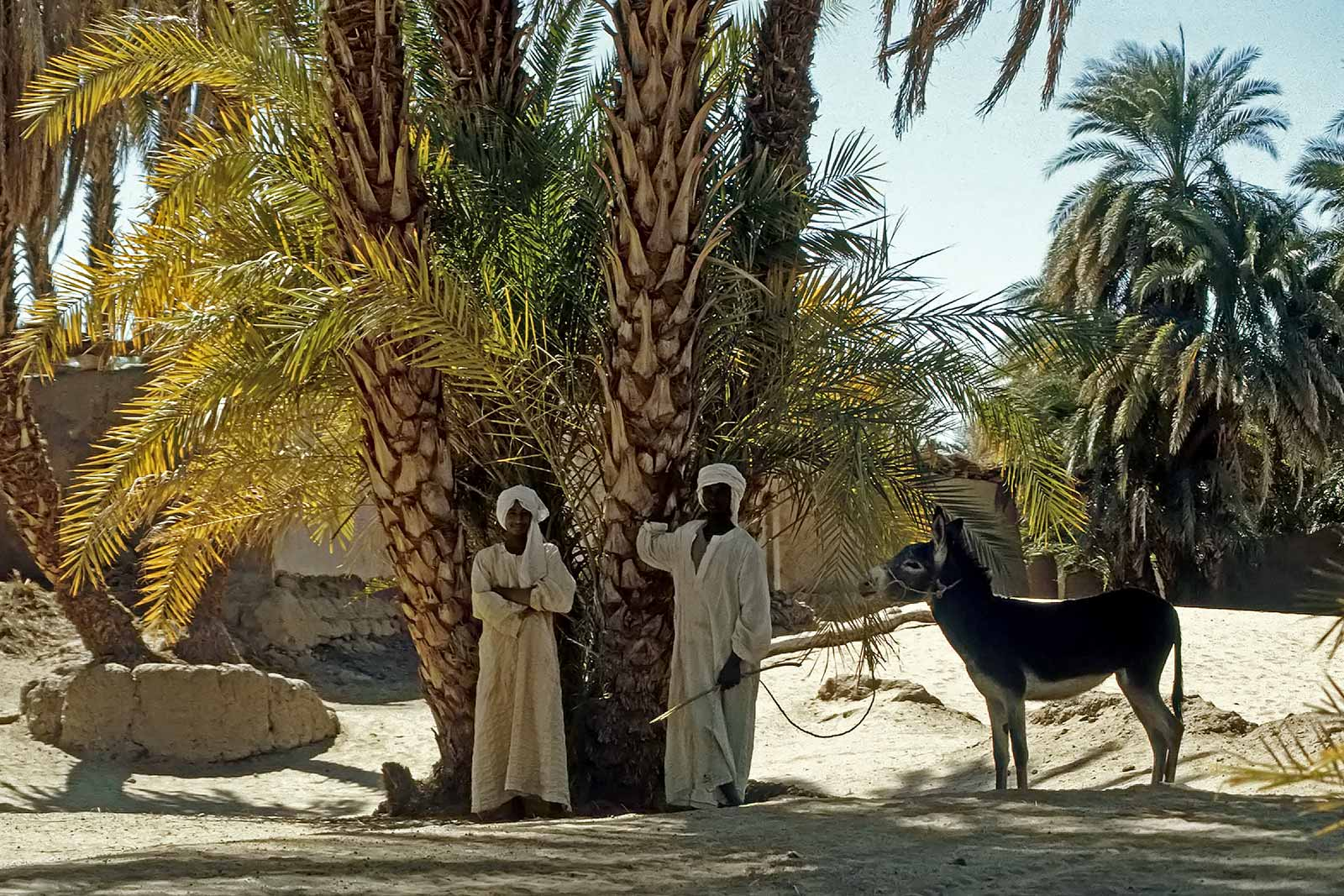 nile-valley-egypt-trucking-africa