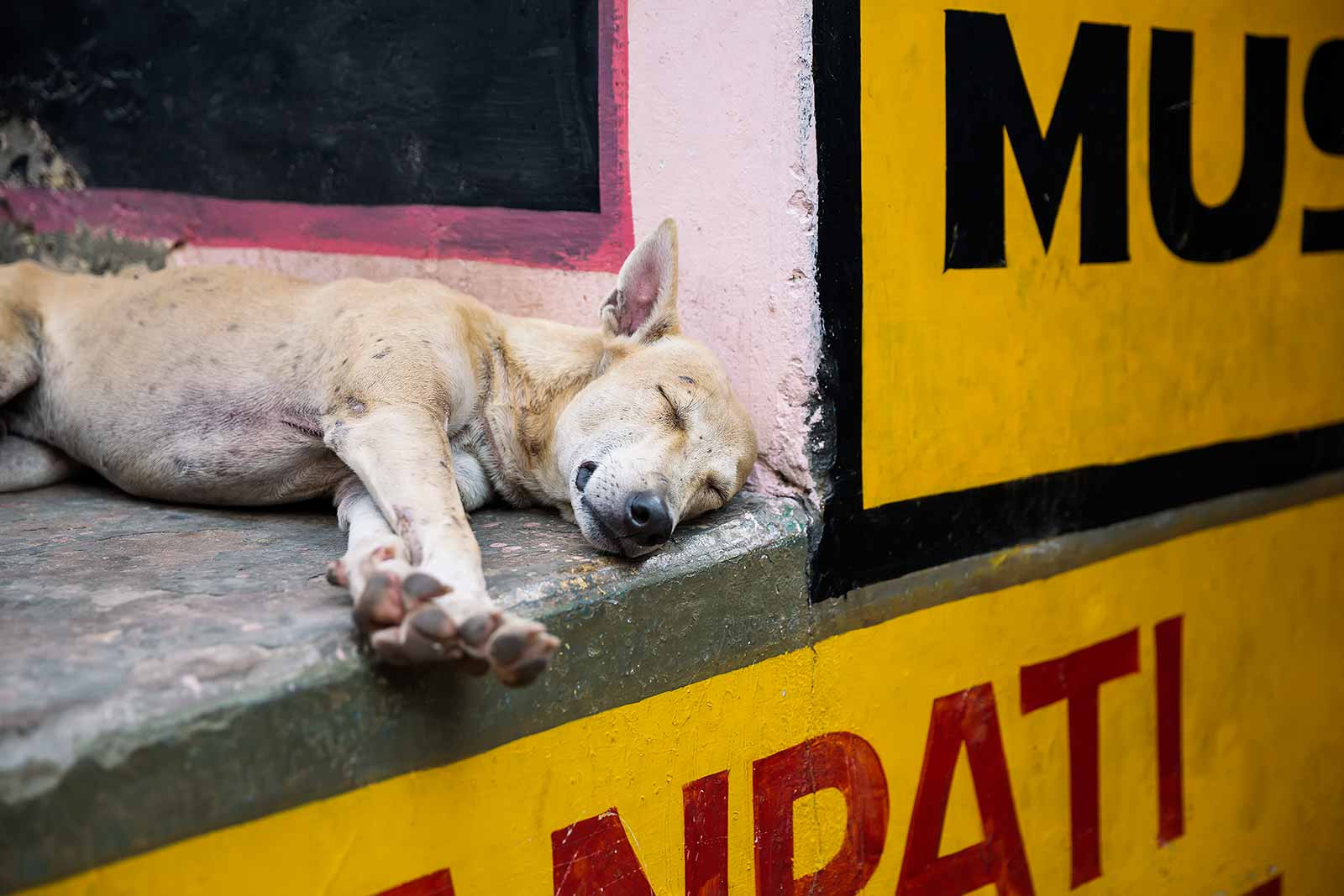 Dogs roam the streets of Varanasi.