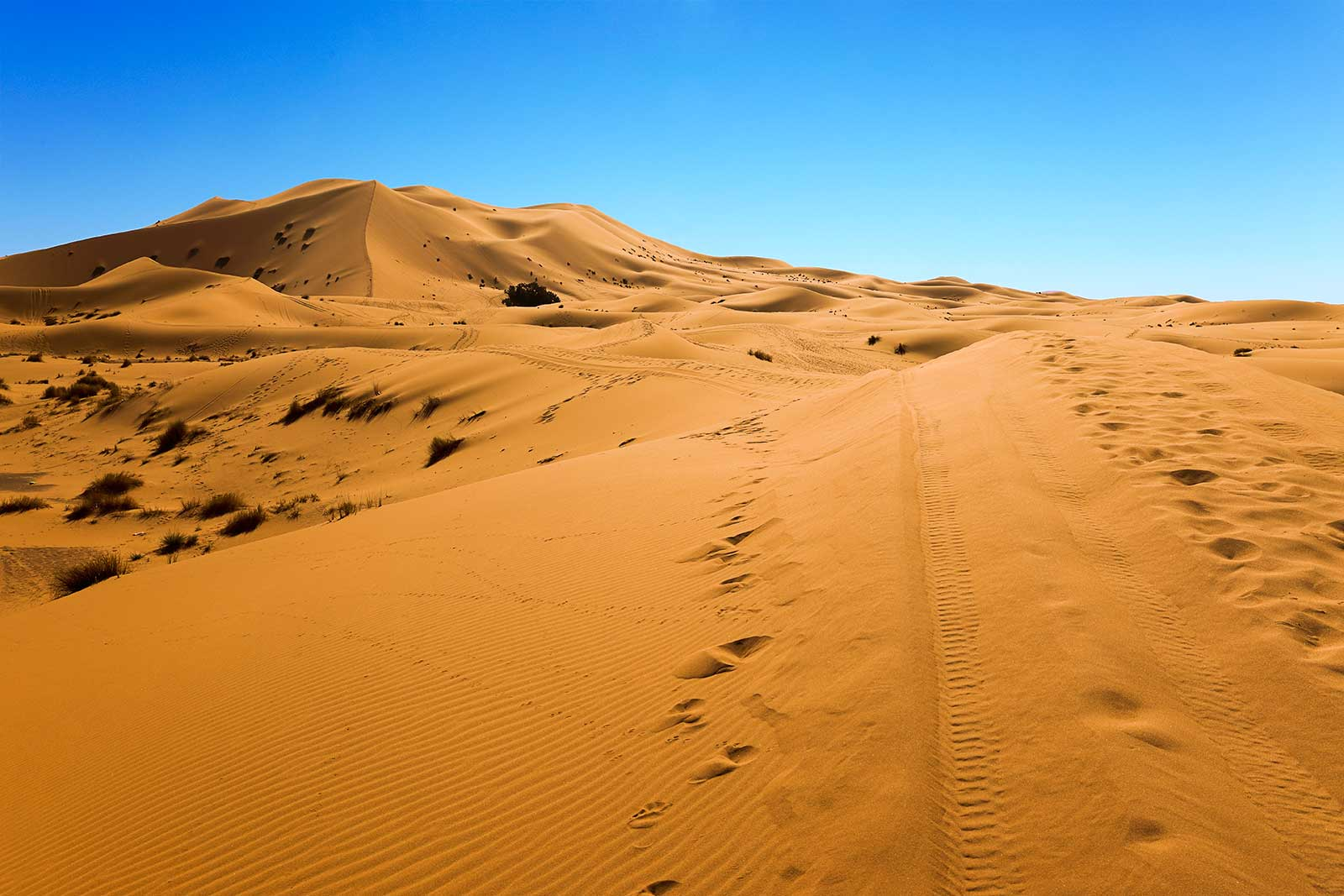Erg Chebbi is one of Morocco's two Saharan ergs near the small village of Merzouga.  And erg is a large sea of dunes formed by wind-blown sand. The other is Erg Chigaga near M'hamid (south of Zagora).