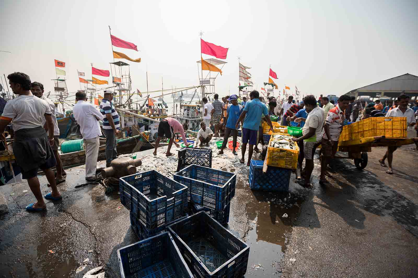 A typical day at Sassoon Docks begins at 5 am when the fresh catch is brought in from the sea.