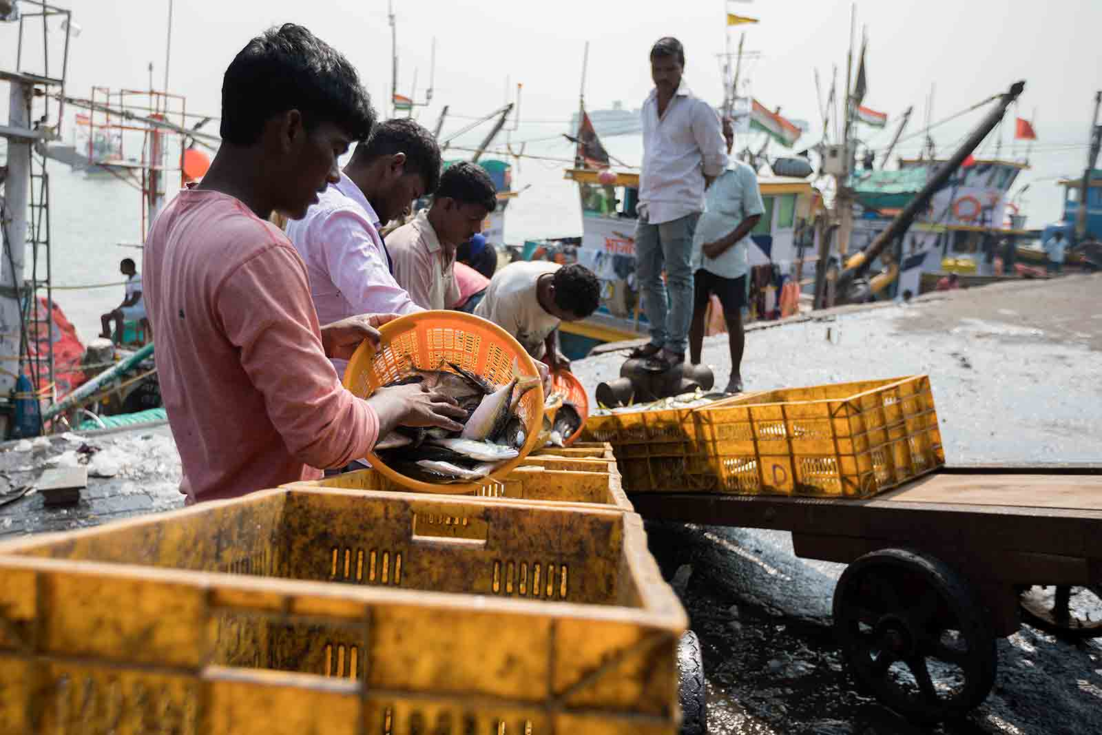 The sheer variety of fish on offer at Sassoon Docks is mind-blowing: red snapper, tuna, octopus, baby sharks, cuttlefish, blue crabs and stingray are some of the fish you can expect to find here.